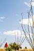 Rancho de la Osa Guest Ranch, Sasabe, AZ - D4 - C3-0191 - 72 ppi