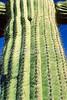 Organ Pipe Cactus Nat'l Monument in Arizona - 4 - 72 ppi