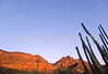 Organ Pipe Cactus Nat'l Monument in Arizona - 2 - 72 ppi