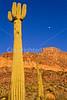 Organ Pipe Cactus Nat'l Monument in Arizona - 21 - 72 ppi