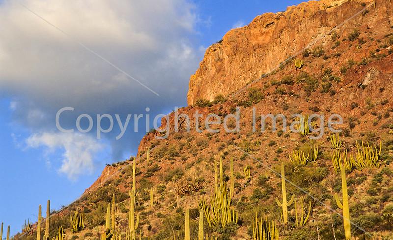 Organ Pipe Cactus Nat'l Monument in Arizona - 9b - 72 ppi