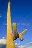 Organ Pipe Cactus Nat'l Monument in Arizona - 19 - 72 ppi