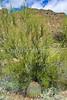 Organ Pipe Cactus Nat'l Monument in Arizona - 15 - 72 ppi