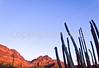 Organ Pipe Cactus Nat'l Monument in Arizona - 14 - 72 ppi