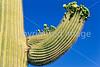 Organ Pipe Cactus Nat'l Monument in Arizona - 36 - 72 ppi