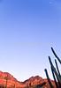 Organ Pipe Cactus Nat'l Monument in Arizona - 13 - 72 ppi