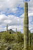 Organ Pipe Cactus Nat'l Monument in Arizona - 17 - 72 ppi
