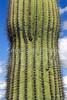 Organ Pipe Cactus Nat'l Monument in Arizona - 22 - 72 ppi