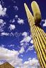 Organ Pipe Cactus Nat'l Monument in Arizona - 11 - 72 ppi