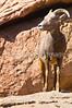 Arizona-Sonora Desert Museum - D2-C1-0003 - 72 ppi