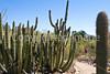 Arizona-Sonora Desert Museum - D2-C3 -0151 - 72 ppi