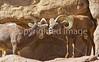 Arizona-Sonora Desert Museum - D2-C1-0031 - 72 ppi