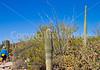Arizona-Sonora Desert Museum - D2-C3 -0116 - 72 ppi