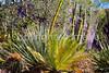 Arizona-Sonora Desert Museum - D2-C3 -0021 - 72 ppi
