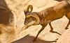 Arizona-Sonora Desert Museum - D2-C1-0077 - 72 ppi