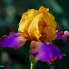 RM_flower_7D_7259