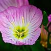 RM_flower_7D_7235