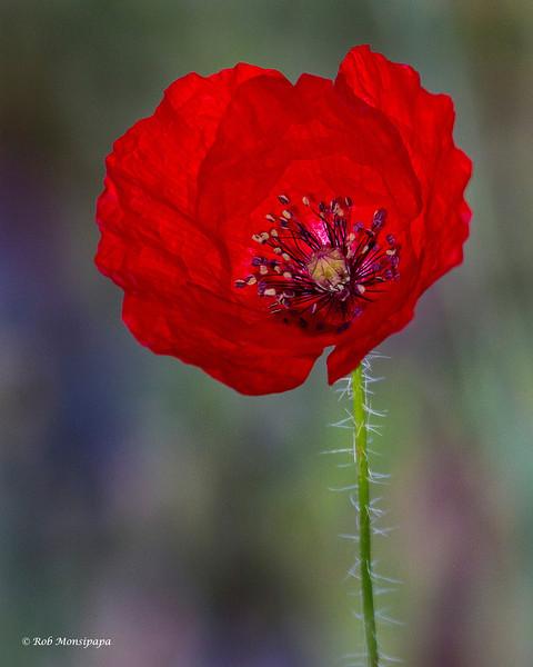 RM_flower_7D_7265