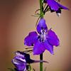 RM_flower_7D_7256