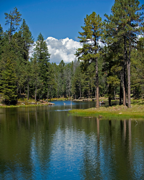 RM_Woods_Canyon_7009067