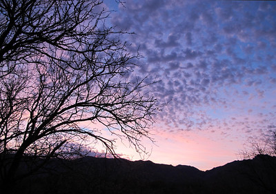 2011 04 ~ Catalina State Park, Tucson AZ