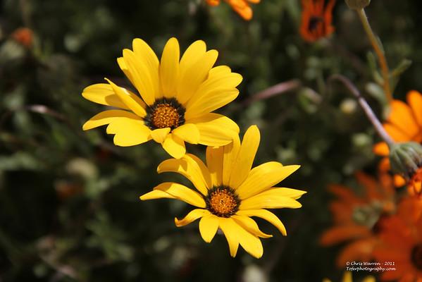 Wildflowers 2011