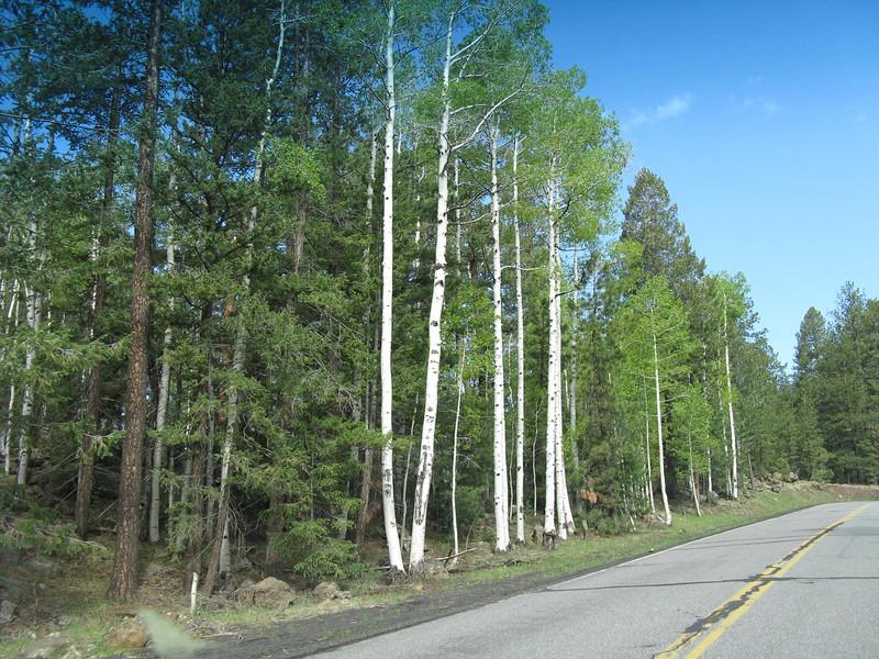 Drive to Snowbowl Ski Resort.