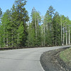 Drive to Snowbowl Ski Resort. Love those aspens!