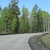 Drive to Snowbowl Ski Resort. Love those aspens!