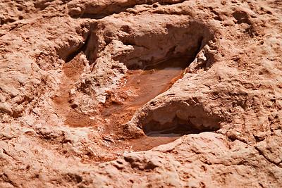 Dinosaur track - Navajo tribal land  - Moenave  - Upper Triassic