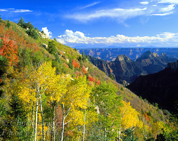 Grand Canyon National Park, AZ/Oct. Red maples and golden aspens display their brilliant autumn colors in this scene from of the North Rim.