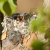 I know this one is out of focus but the lens was having a very hard time focusing on these two.