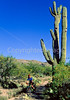 Cactus Forest Trail in Saguaro Nat  Pk , AZ - 41 - 72 ppi-2