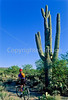 Cactus Forest Trail in Saguaro Nat  Pk , AZ - 24-Edit - 72 ppi