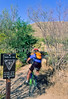 Cactus Forest Trail in Saguaro Nat  Pk , AZ - 37 - 72 ppi-2