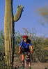 Cactus Forest Trail in Saguaro Nat  Pk , AZ - 61 - 72 ppi