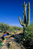 Cactus Forest Trail in Saguaro Nat  Pk , AZ - 64 - 72 ppi