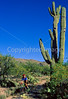 Cactus Forest Trail in Saguaro Nat  Pk , AZ - 21 - 72 ppi-2