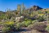 Desert vegetation of cactus in the Organ Pipe Cactus National Monument, Arizona, USA.