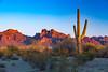 Desert view of Saguaro cactus at sunset in the Organ Pipe Cactus National Monument, Arizona, USA.