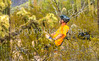 Organ Pipe Cactus National Monument - D1-C1-0078 - 72 ppi-2