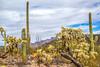 Organ Pipe National Monument in Arizona - C3-0074 - 72 ppi