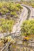 Organ Pipe National Monument in Arizona - C1-0226 - 72 ppi