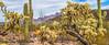 Organ Pipe National Monument in Arizona - C3-0074 - 72 ppi-2