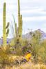 Organ Pipe National Monument in Arizona - C1-0067 - 72 ppi
