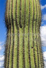 Organ Pipe Cactus Nat'l Monument in Arizona - 22 - 72 ppi
