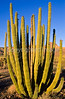 Organ Pipe Cactus Nat'l Monument in Arizona - 29 - 72 ppi