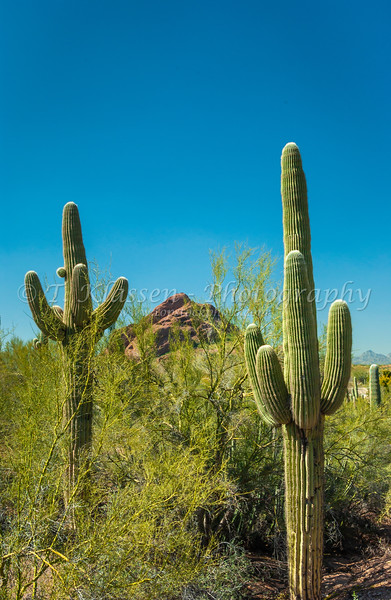 Scenes of the cacti and flowers at the Desert Botanical Gardens in Phoenix, Arizona, USA.