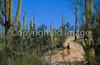 Biker on Hohokam Rd , west side of Saguaro NP in AZ - 4 - 72 ppi