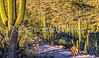 Saguaro National Park - C1-0057 - 72 ppi-3